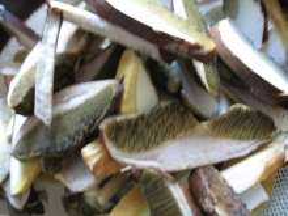 Processing mushrooms